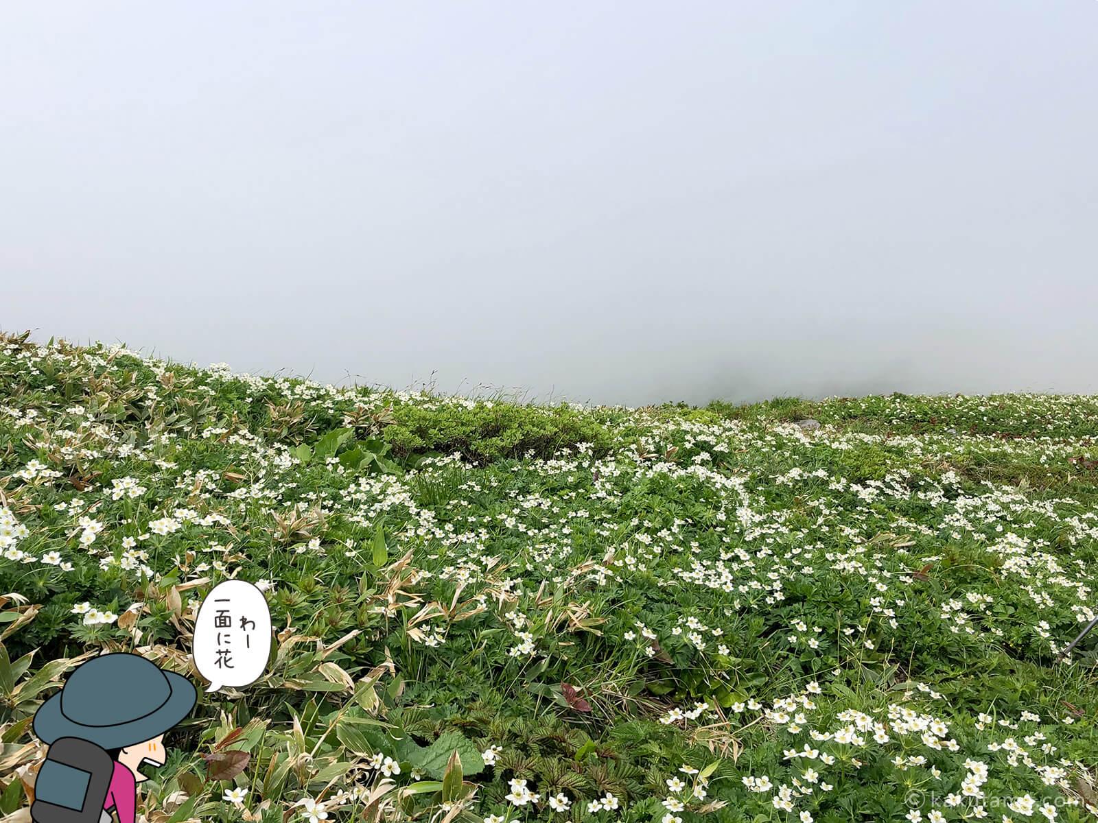 一面のお花畑