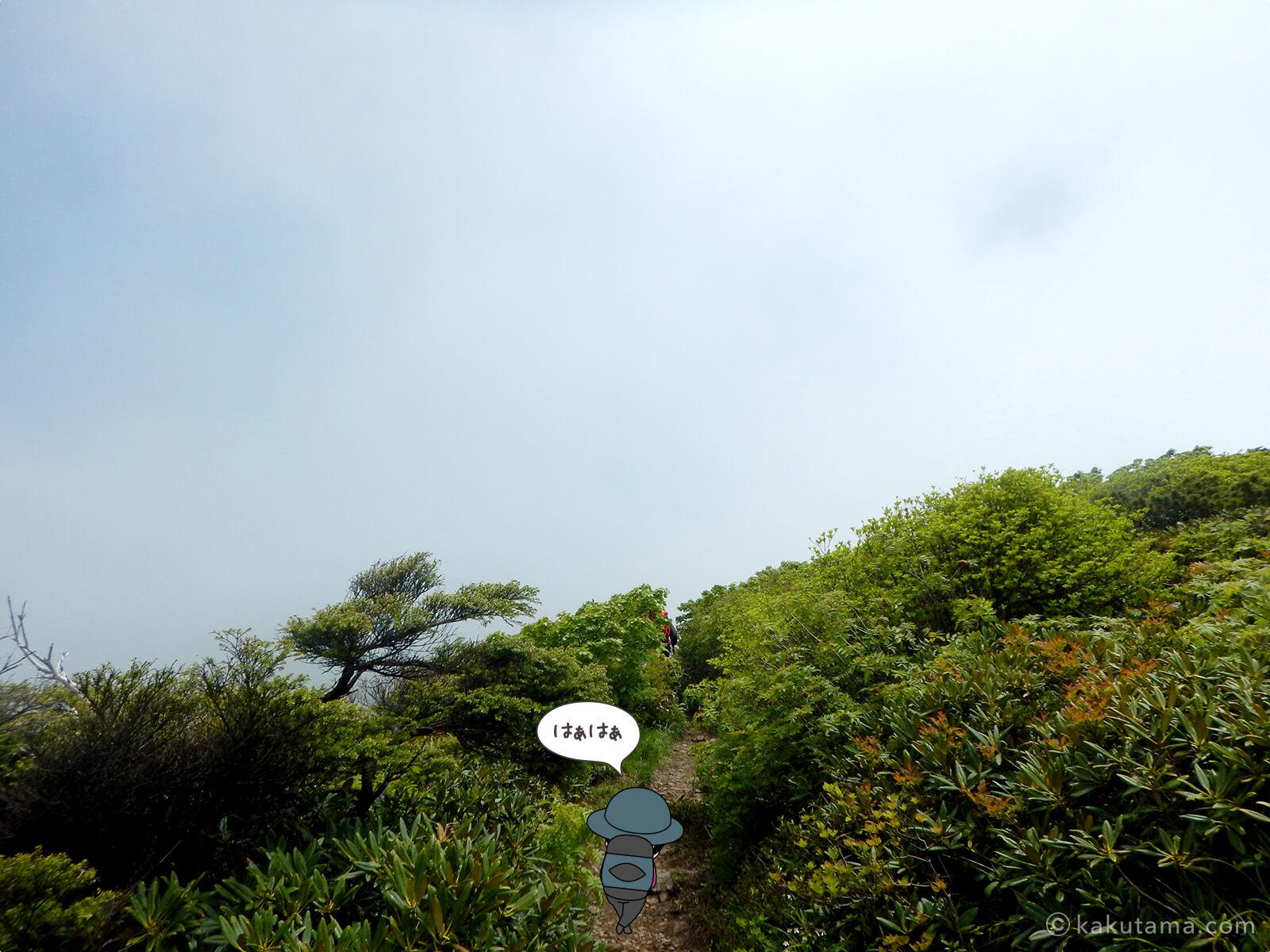 仙ノ倉山へ向かって進む8