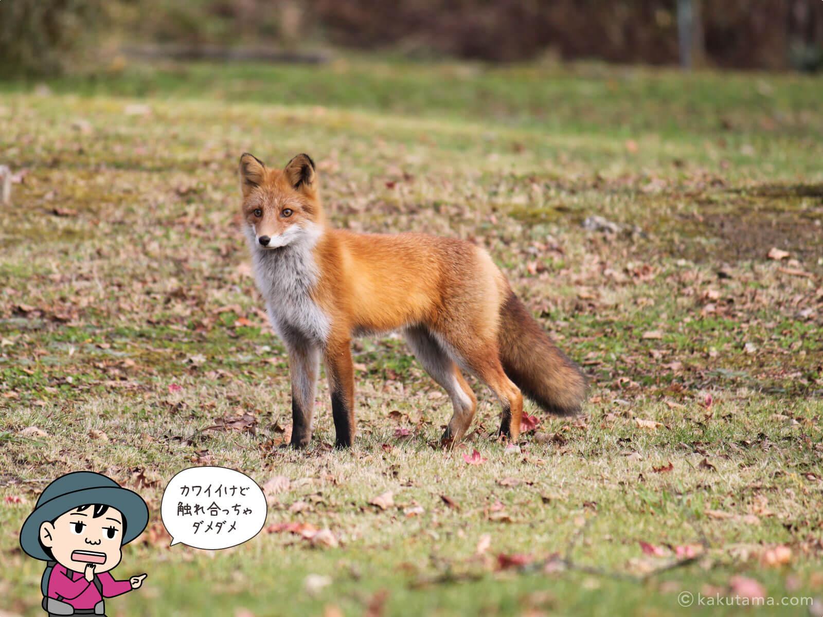 登山用語「狐」にまつわる写真