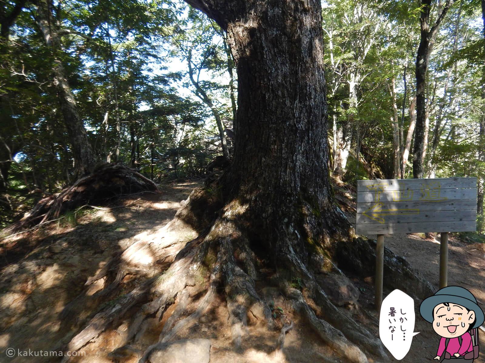 瑞牆山荘から富士見平小屋まで登る6
