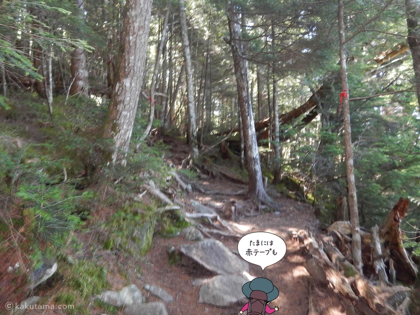 大日小屋方面へ登る11