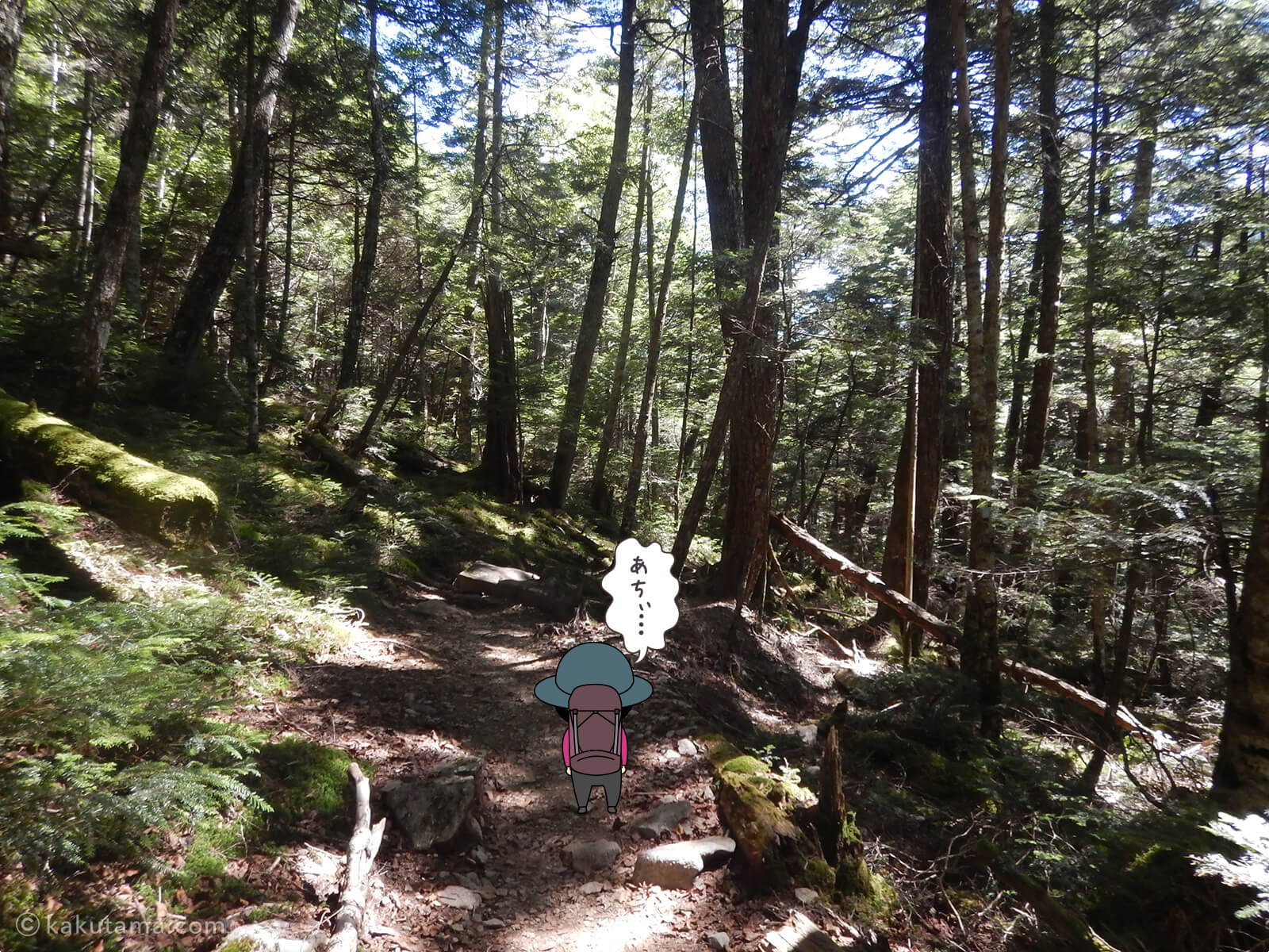 鷹見岩との分岐から大日小屋へ進む1