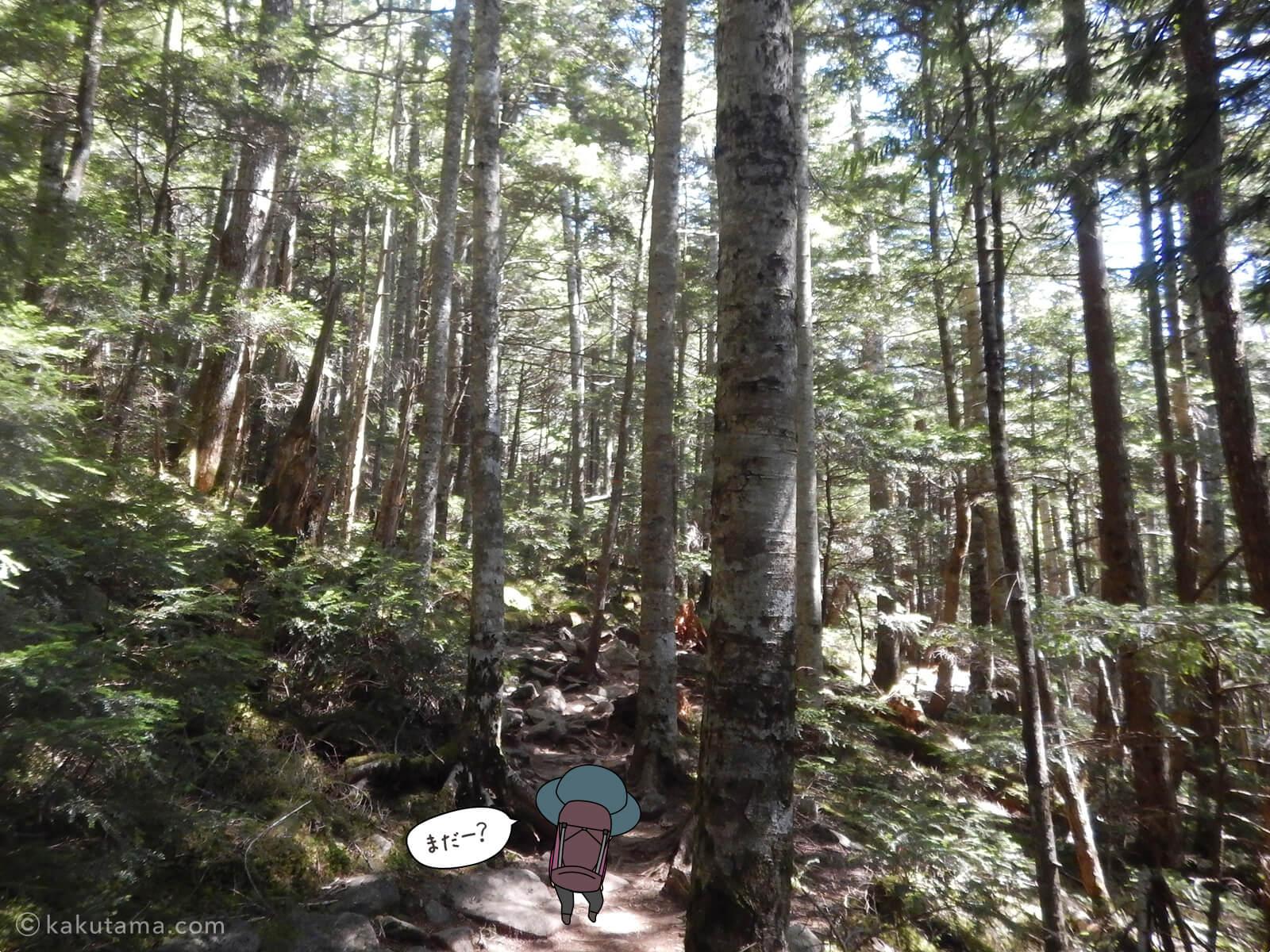 鷹見岩との分岐から大日小屋へ進む2