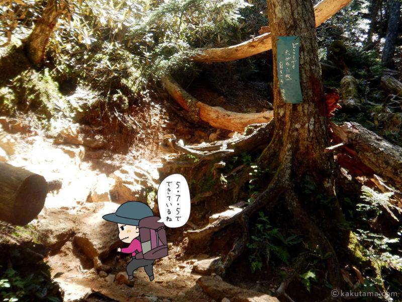 大日小屋から金峰山へ向かって歩く4