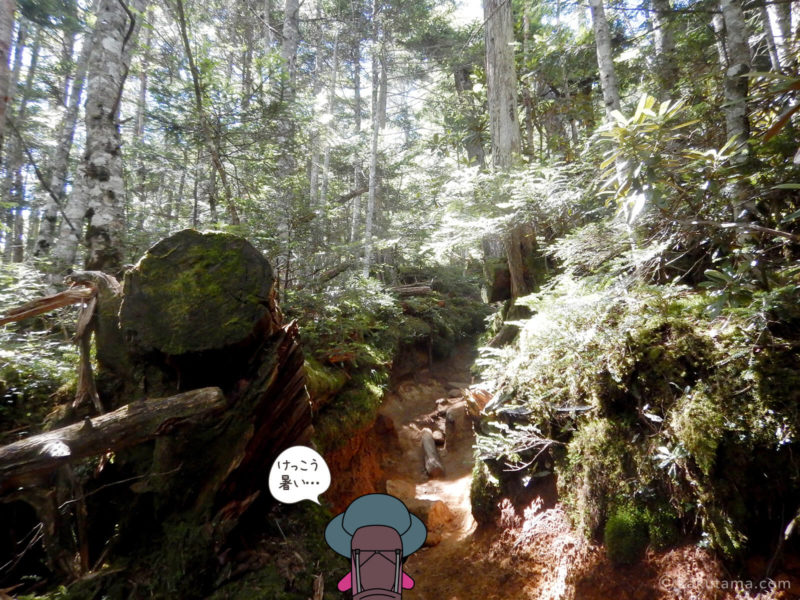 大日岩から金峰山への登り1