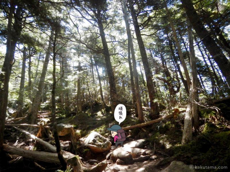 大日岩から金峰山への登り2