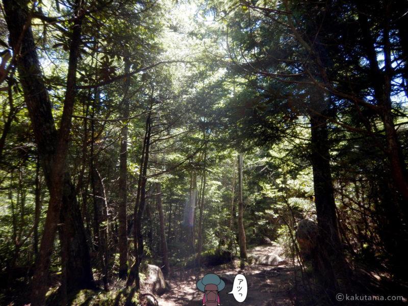大日岩から金峰山への登り4