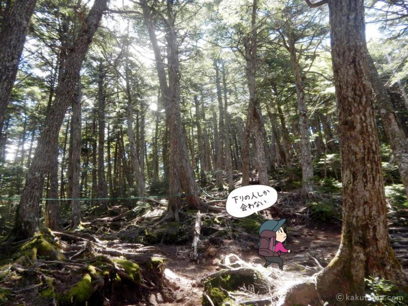 大日岩から金峰山への登り6