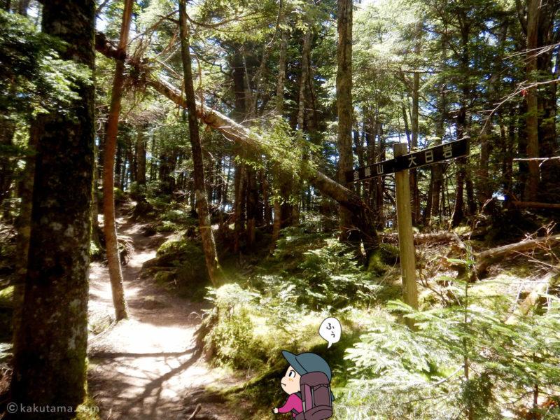 大日岩から金峰山への登り7