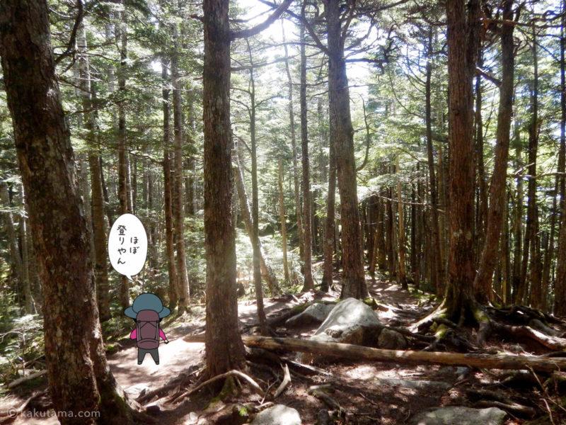 大日岩から金峰山への登り8