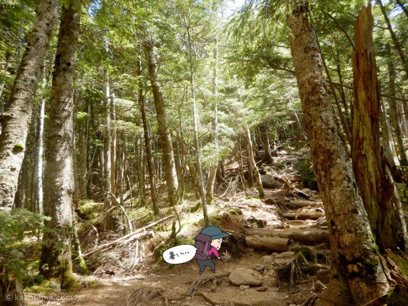 大日岩から金峰山への登り9