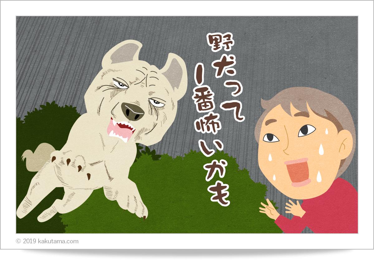 登山用語「野犬」にまつわるイラスト