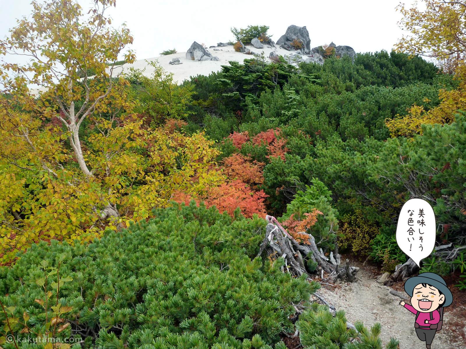 鳳凰三山薬師岳での紅葉写真とイラスト1