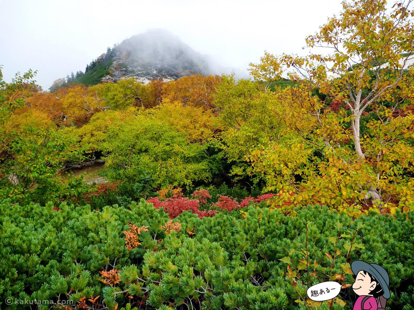 鳳凰三山薬師岳での紅葉写真とイラスト3
