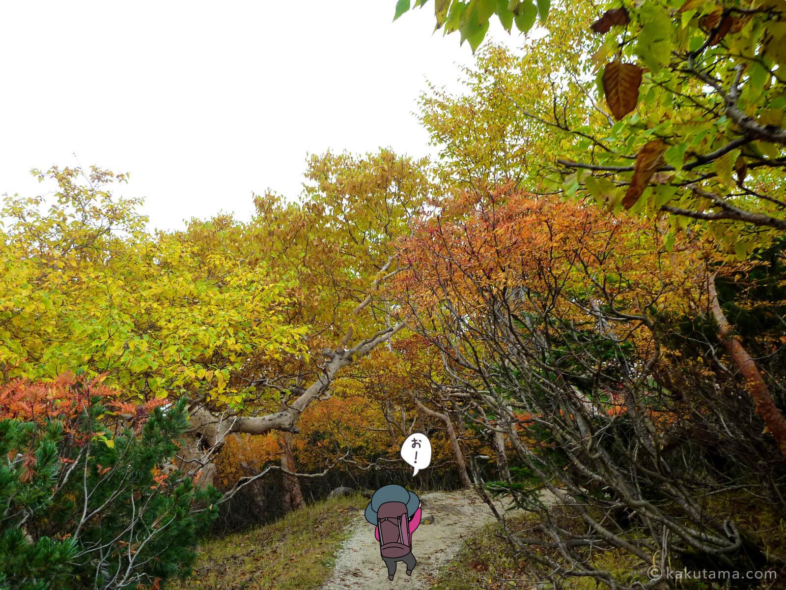 鳳凰三山薬師岳での紅葉写真とイラスト4