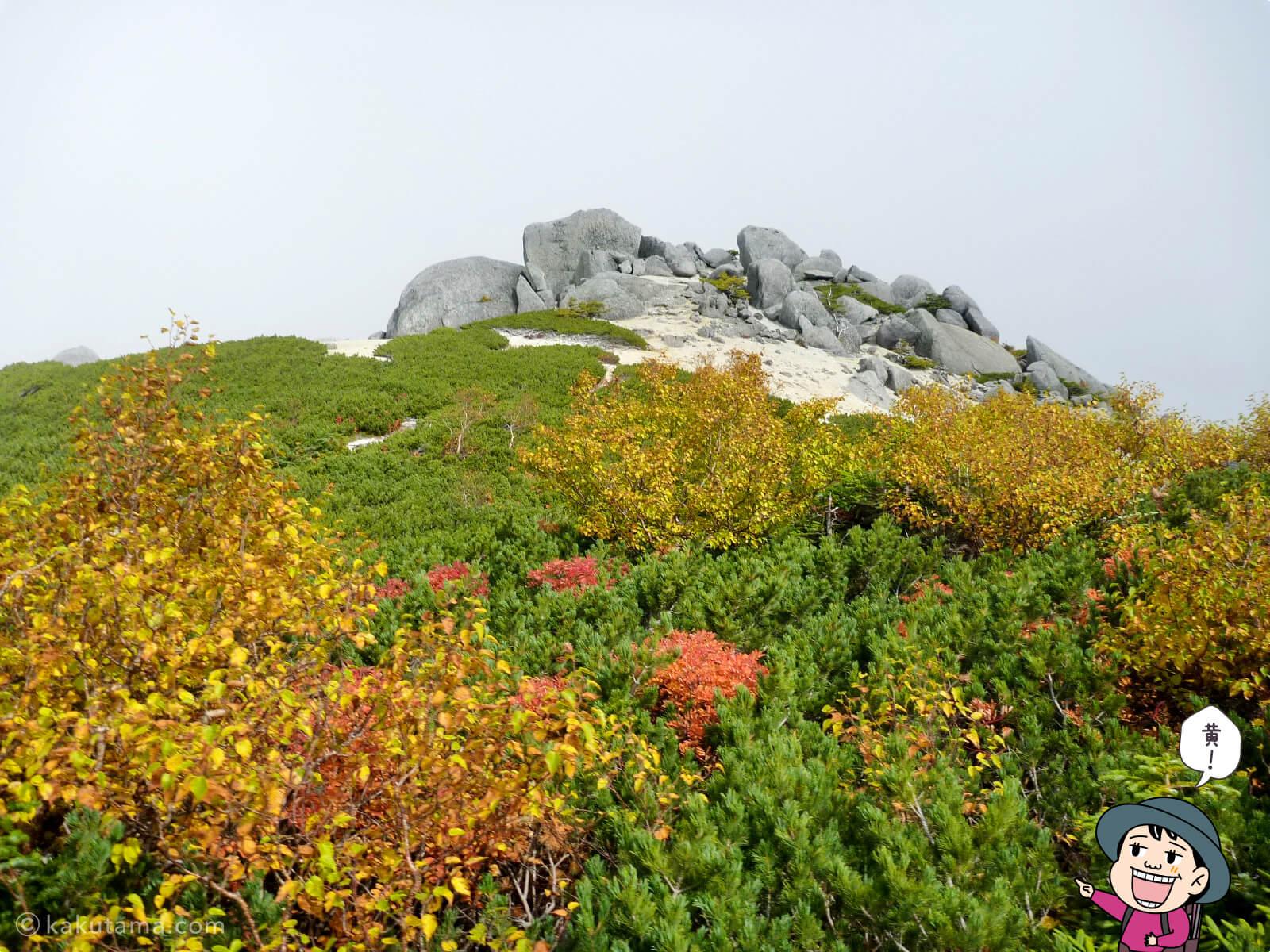 鳳凰三山薬師岳での紅葉写真とイラスト5