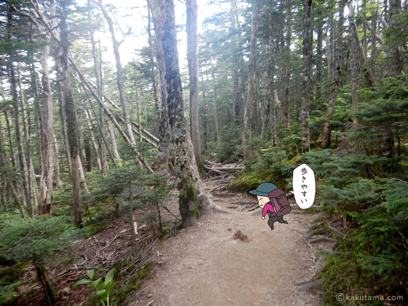 樹林帯を下る3