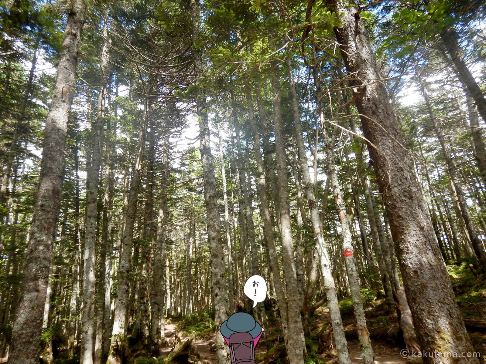 濃い樹林帯