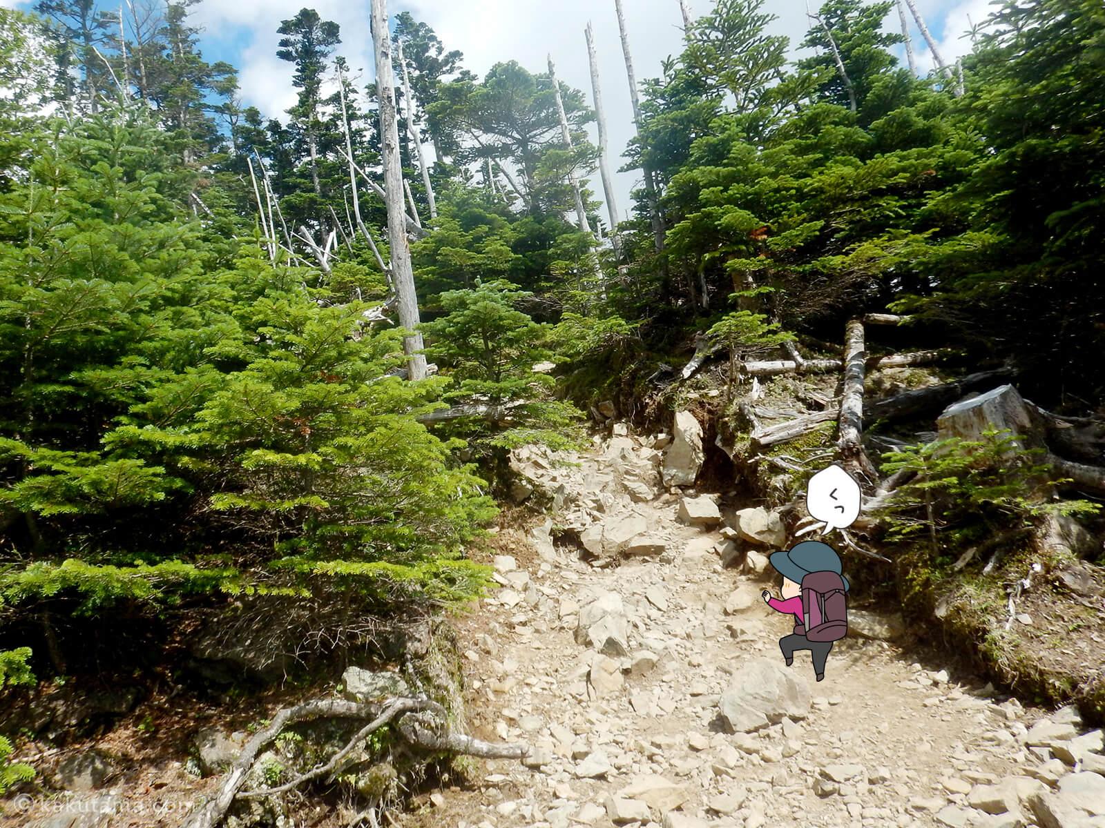 アップダウンの多い登山道1