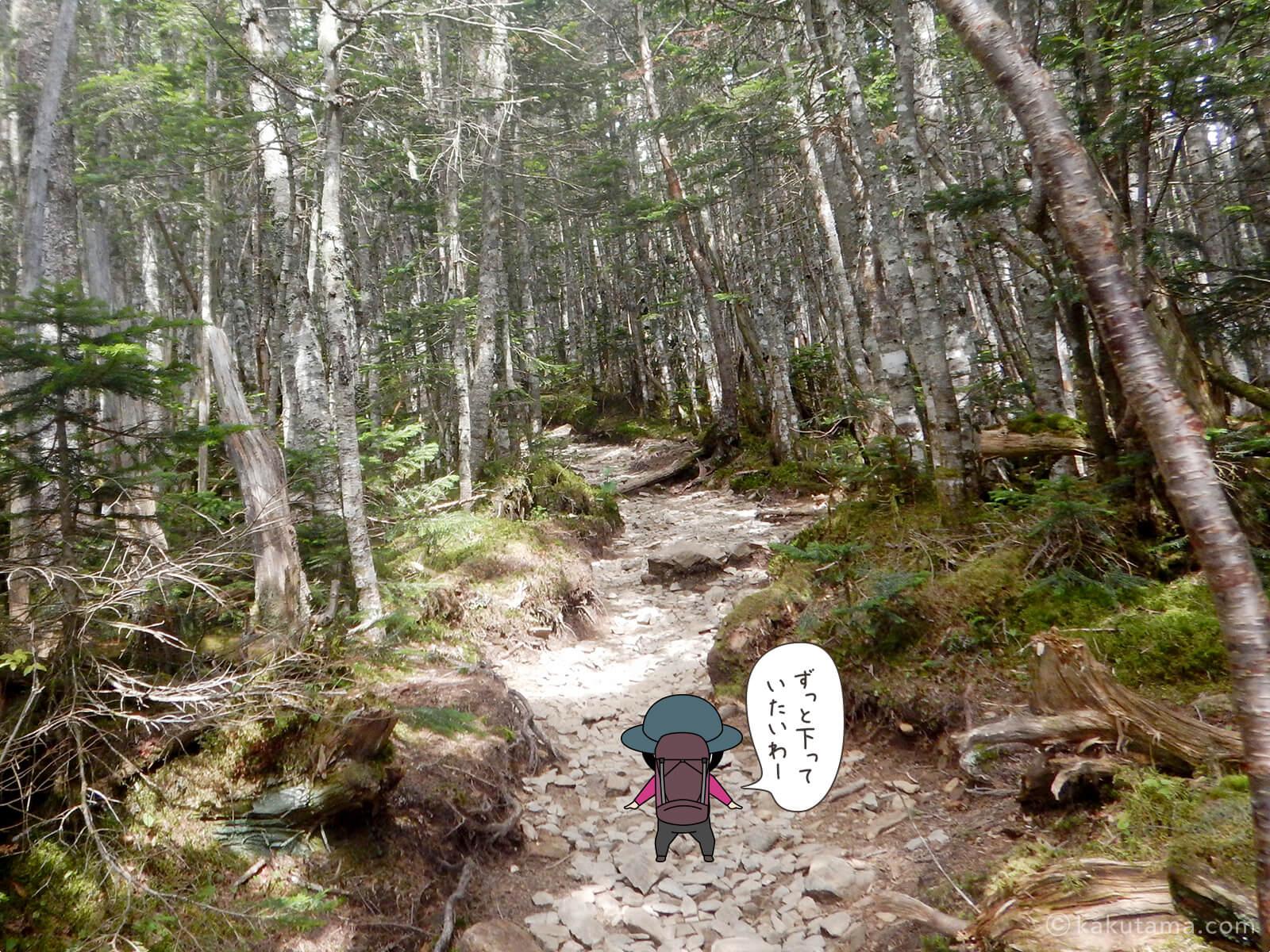 アップダウンの多い登山道2