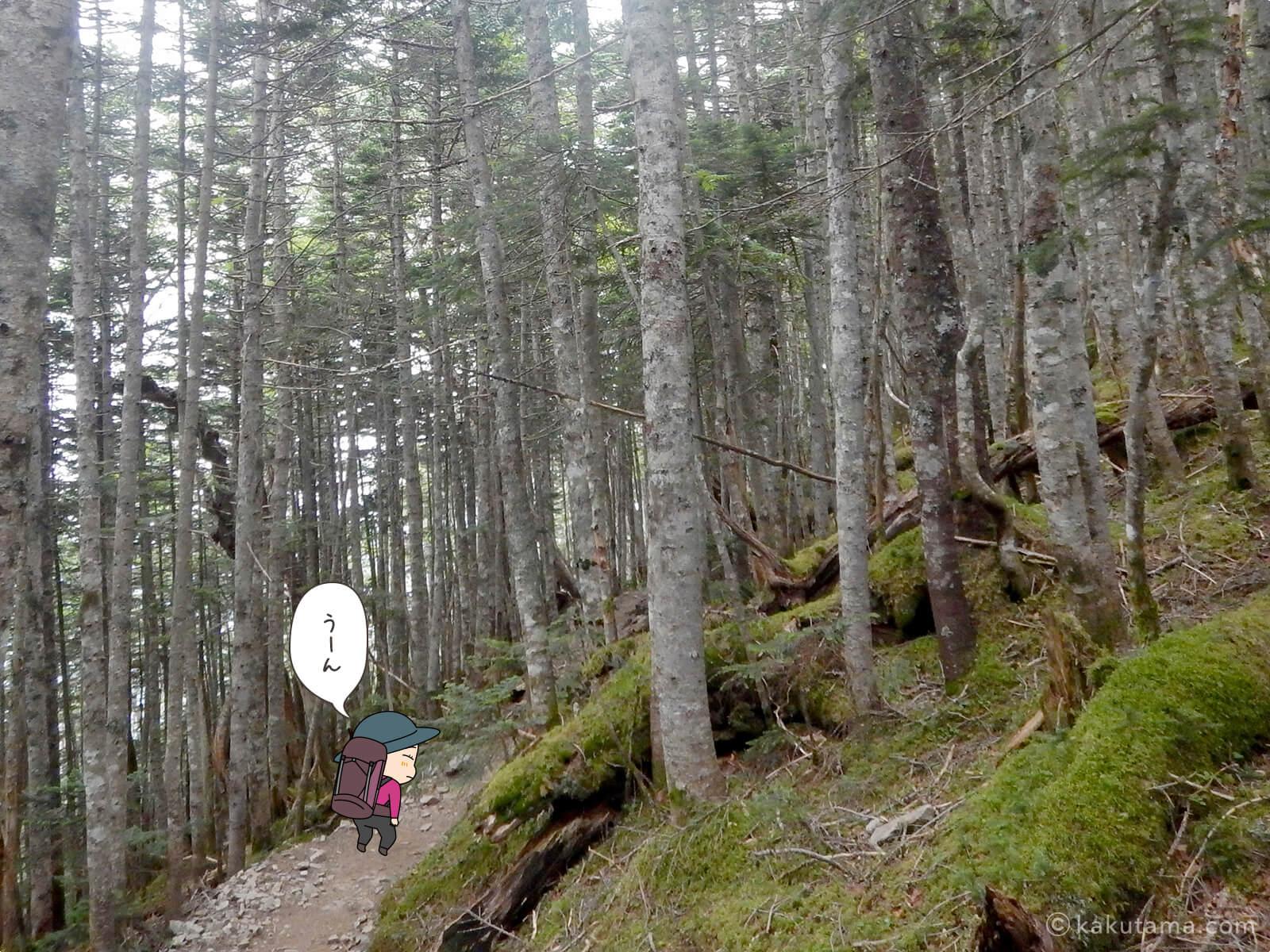 朝日岳から大弛峠へ向かって下山2