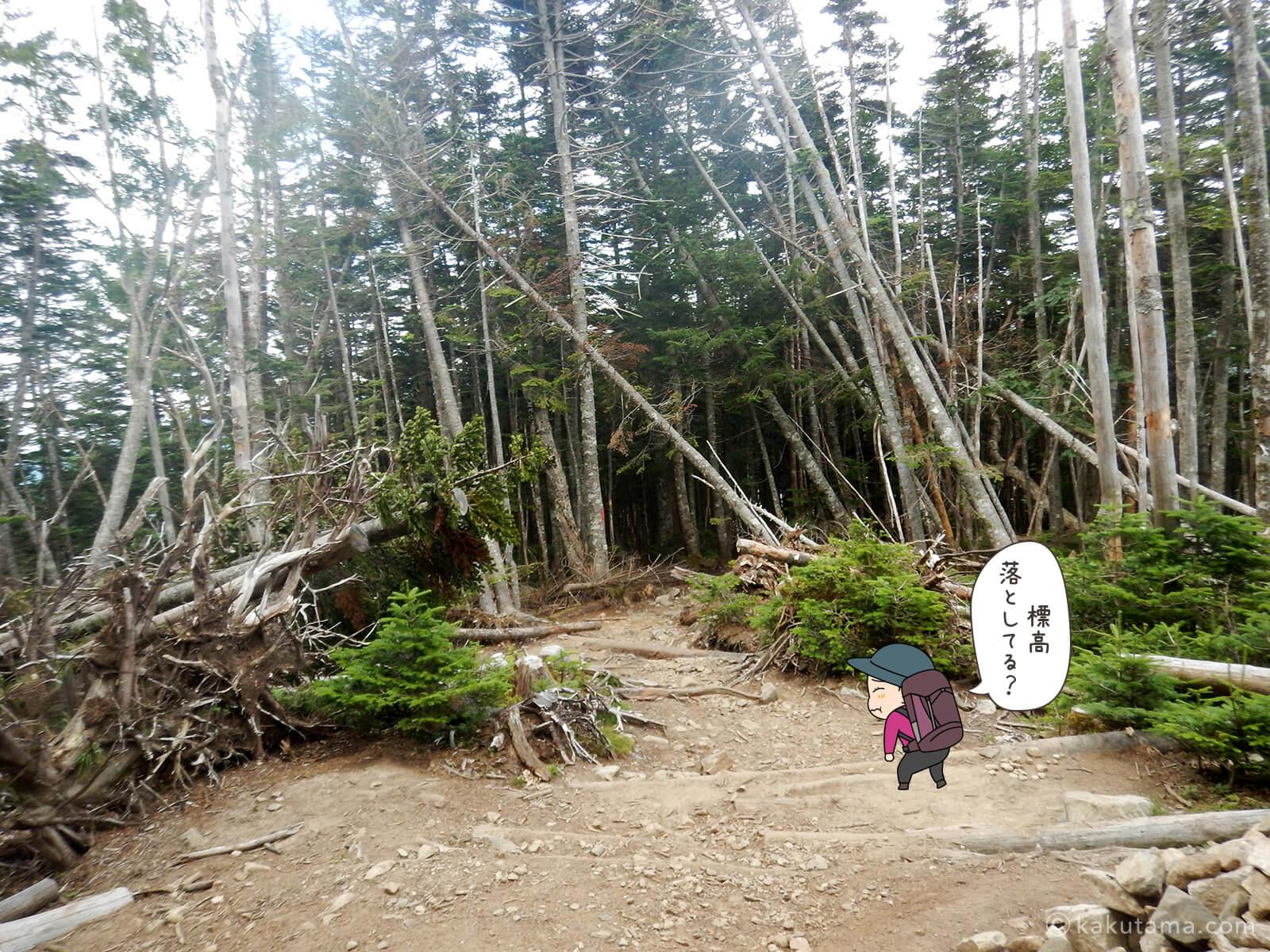 朝日岳から大弛峠へ向かって下山3