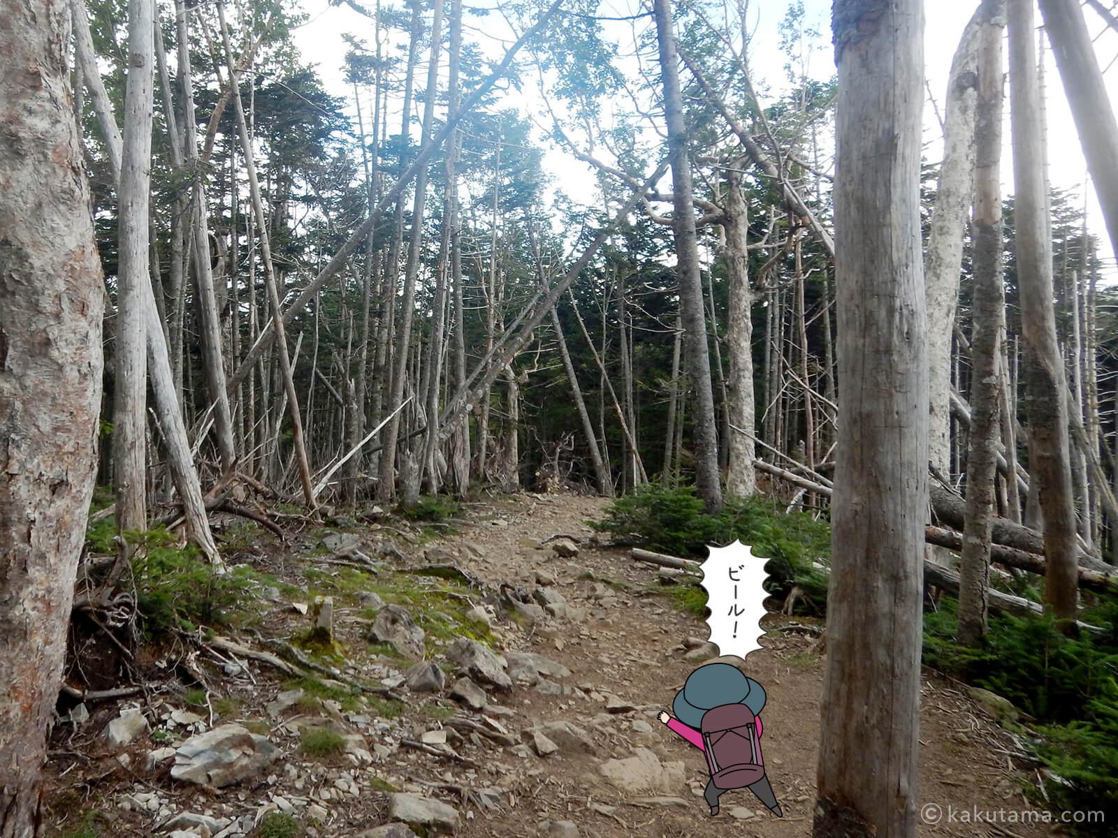 朝日岳から大弛峠へ向かって下山4