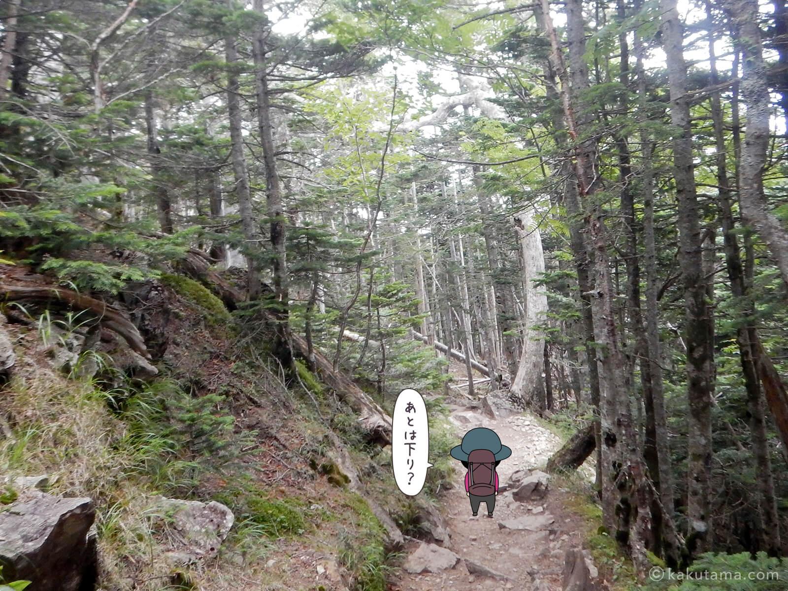 朝日峠から大弛峠へ向かって歩く1