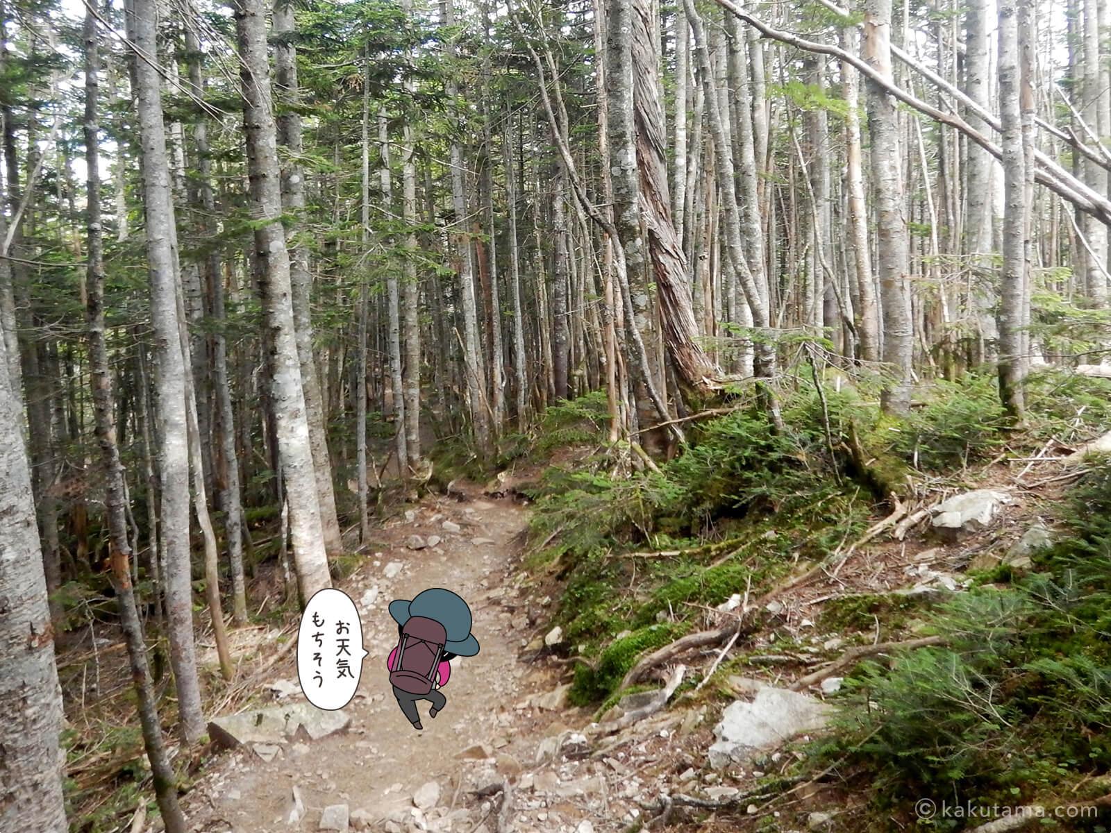 朝日峠から大弛峠へ向かって歩く3