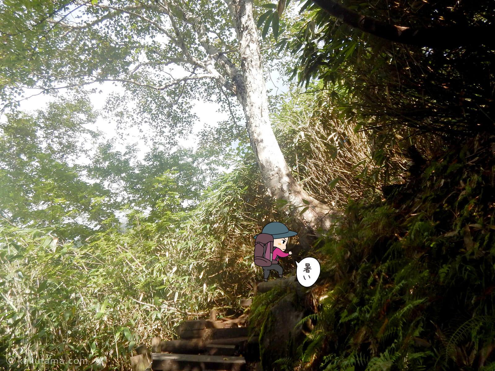 栂池自然公園から登山道の登り1