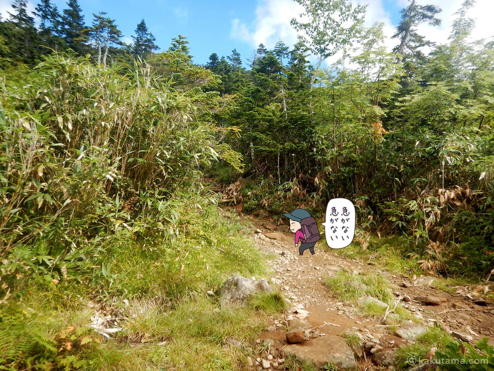 栂池自然公園から登山道の登り4