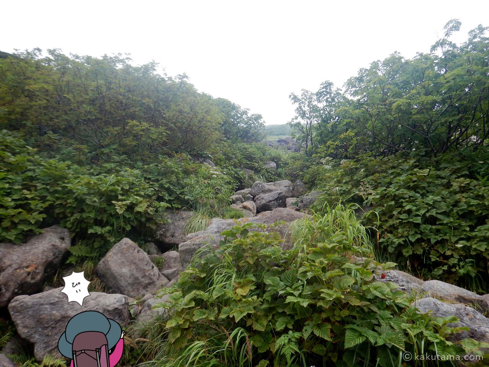 ひたすら岩場を登る1