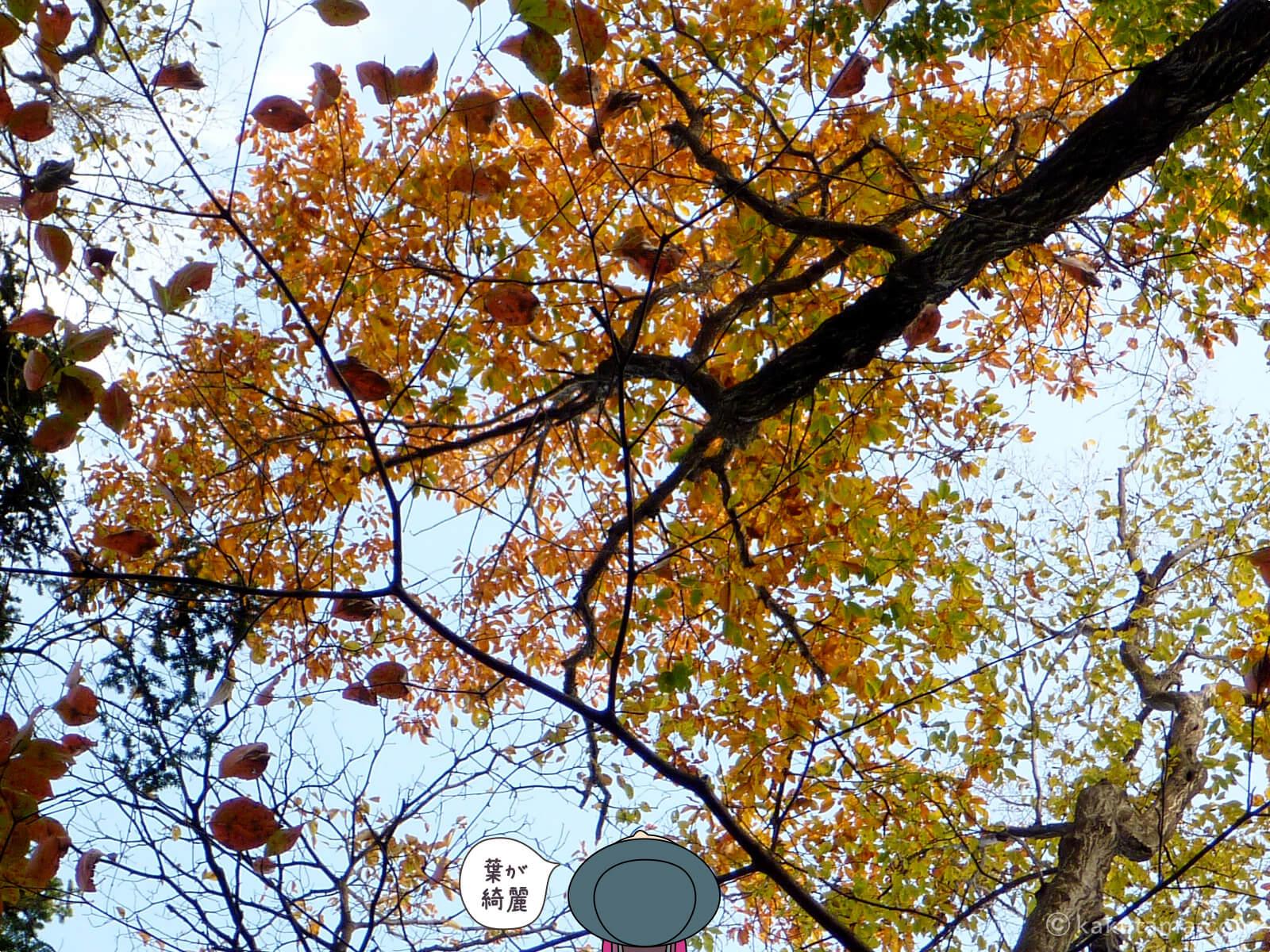 紅葉した葉が綺麗