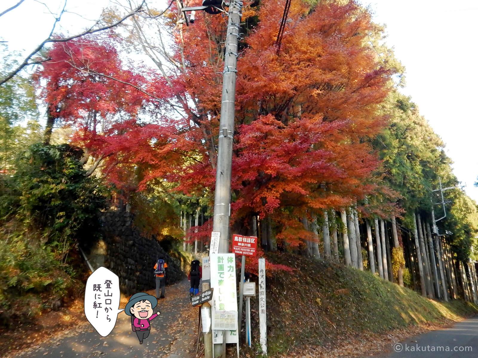 丹沢大倉尾根の紅葉の写真1
