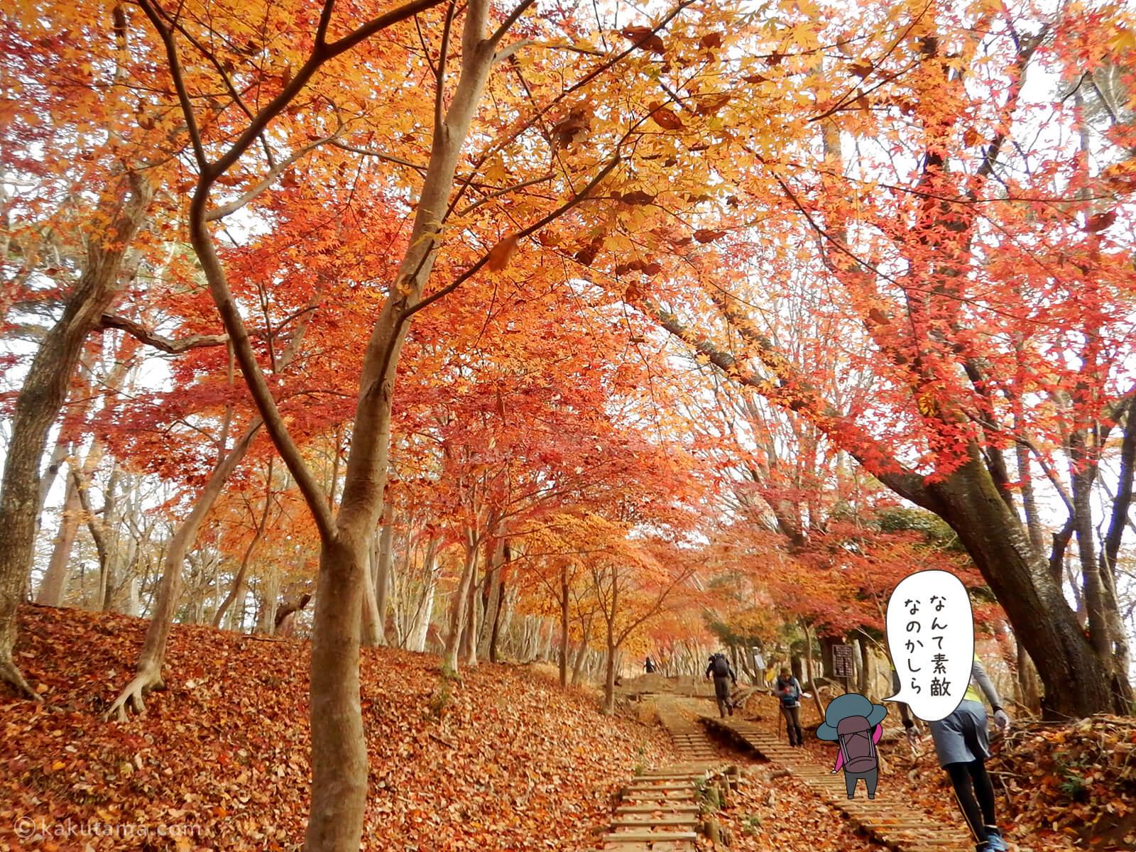丹沢大倉尾根の紅葉の写真2