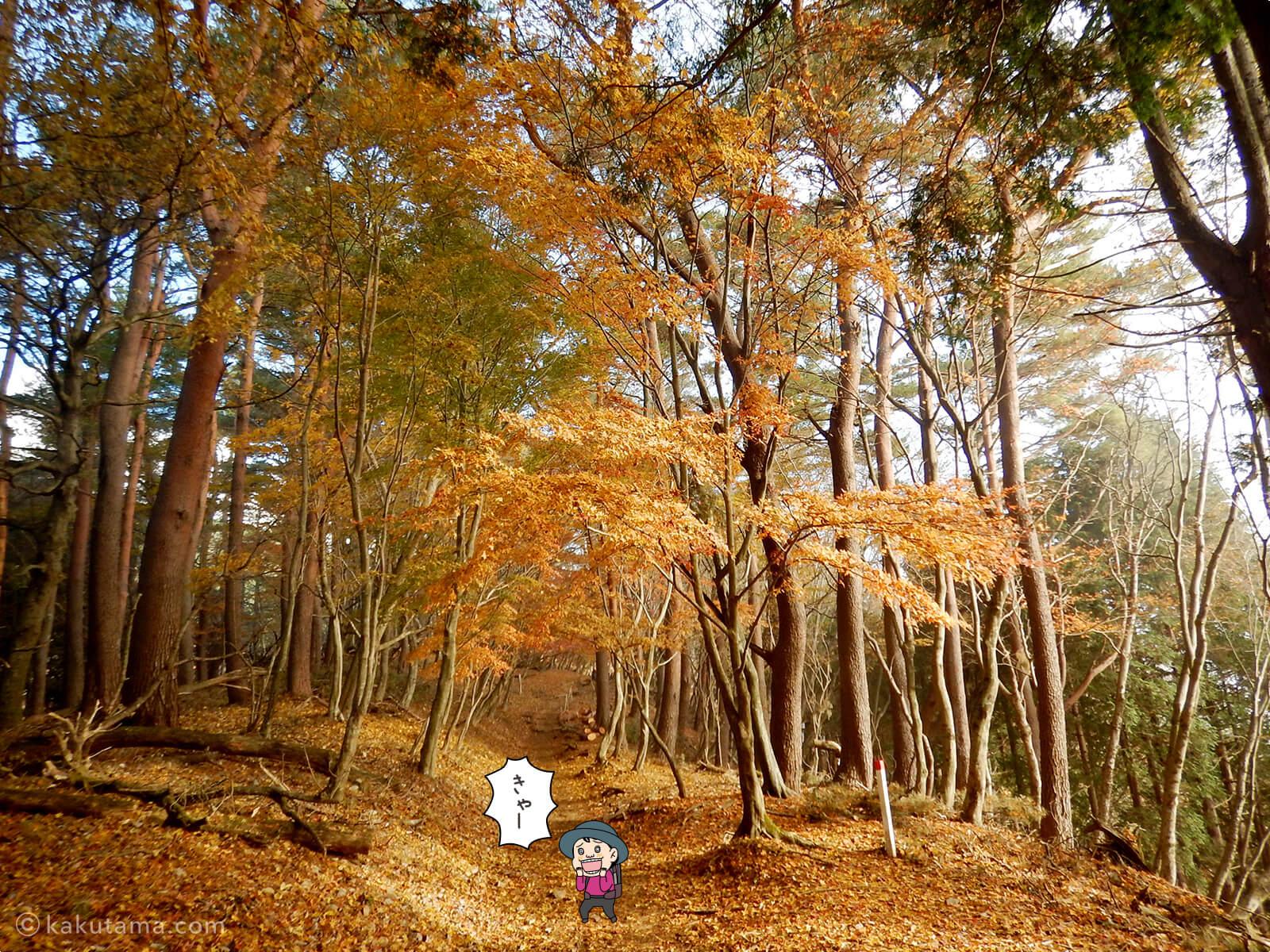 丹沢大倉尾根の紅葉の写真3