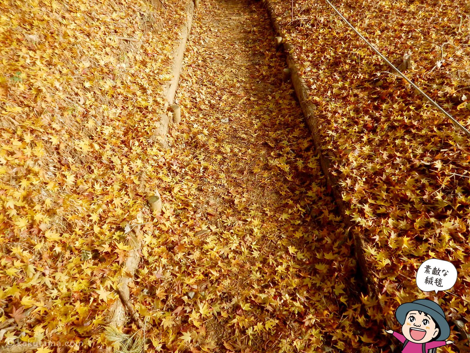 丹沢大倉尾根の紅葉の写真4