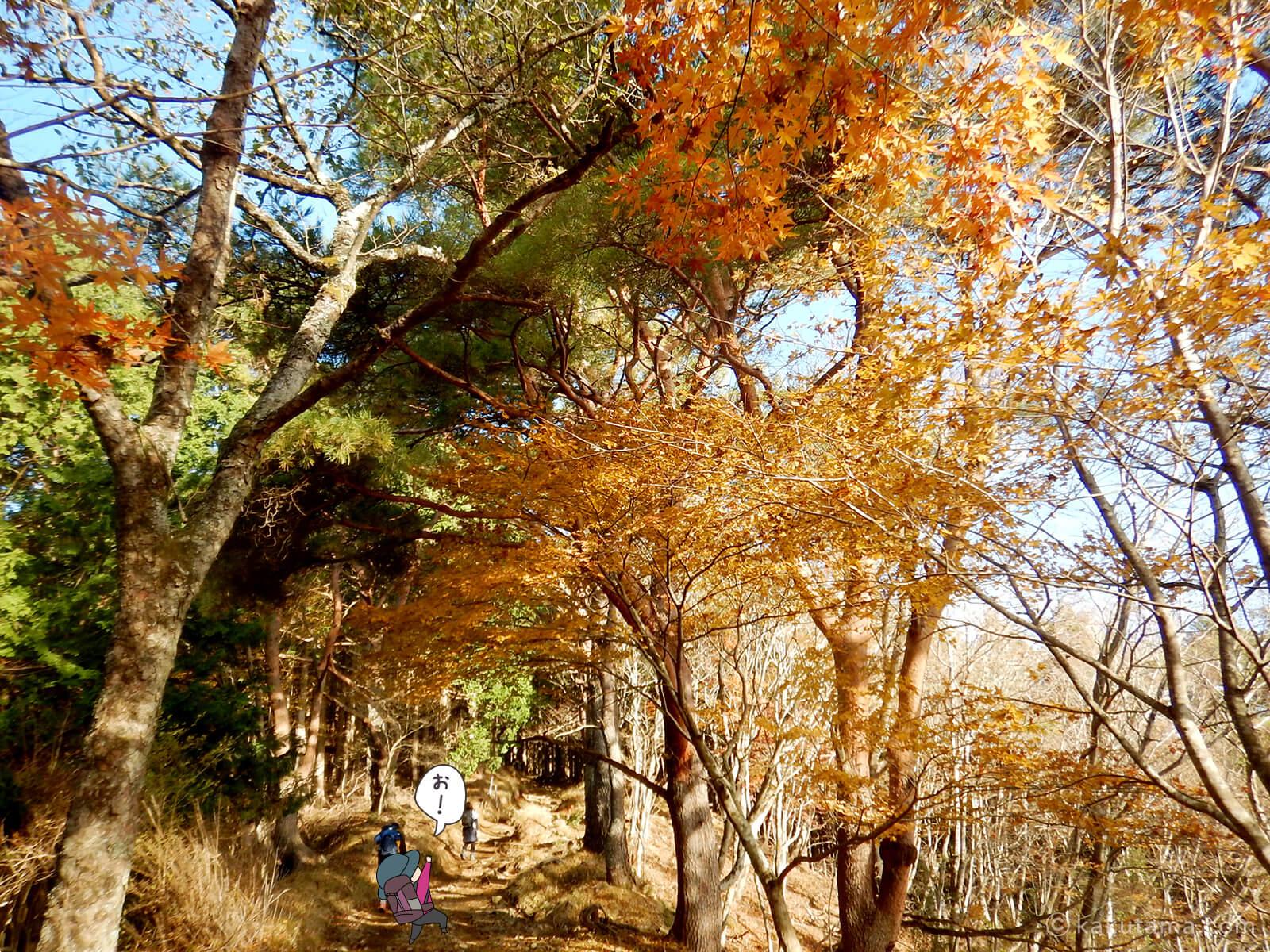 丹沢大倉尾根の紅葉の写真5