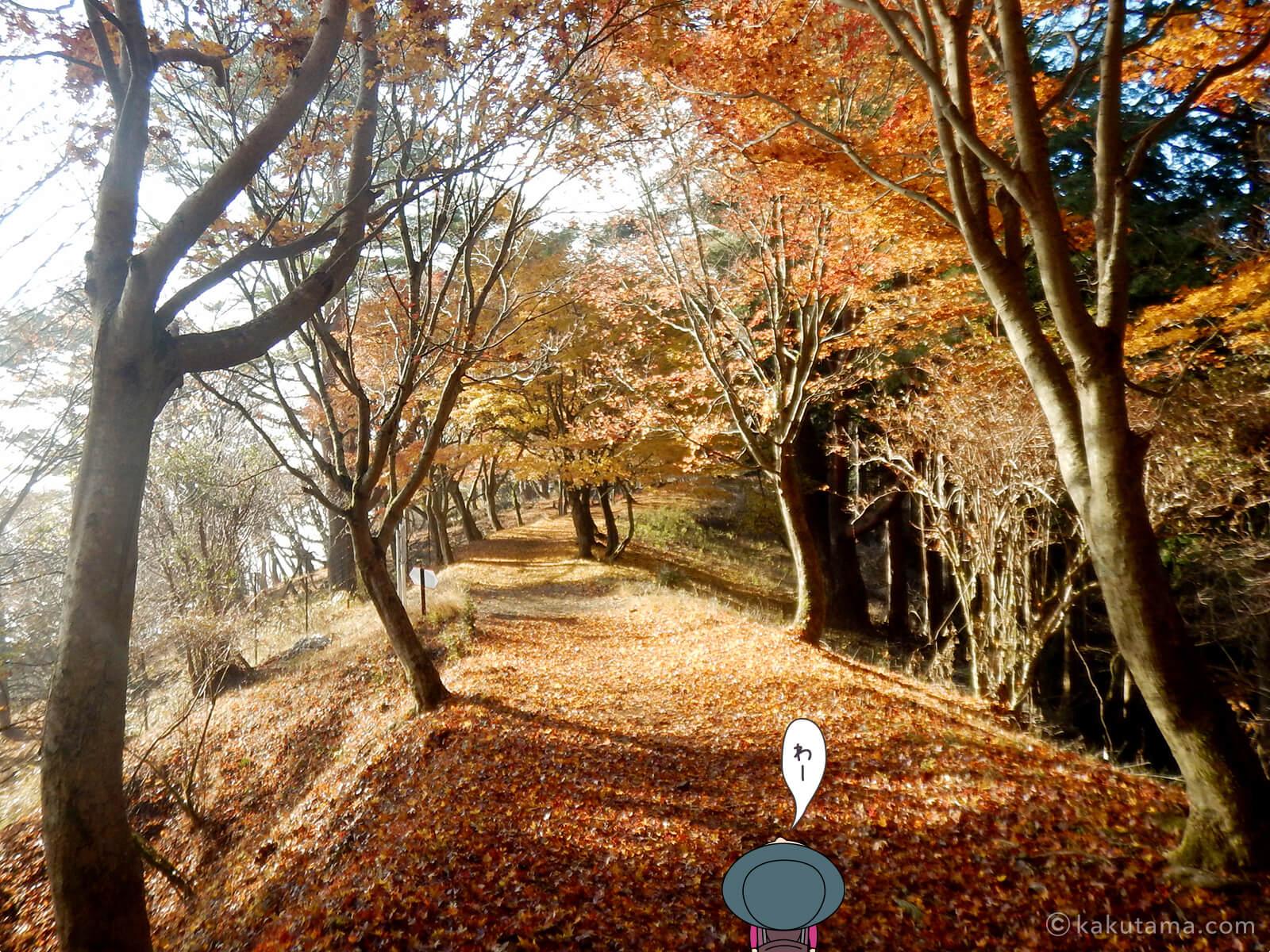 丹沢大倉尾根の紅葉の写真6