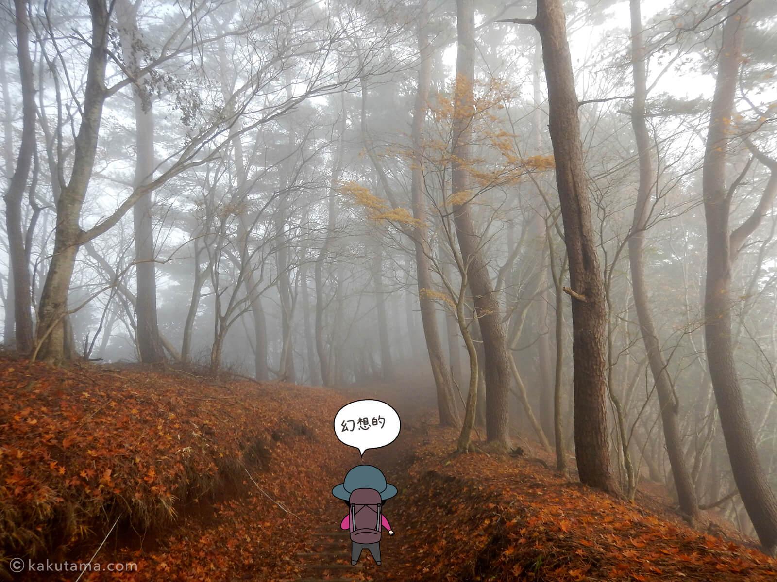 丹沢大倉尾根の紅葉の写真7