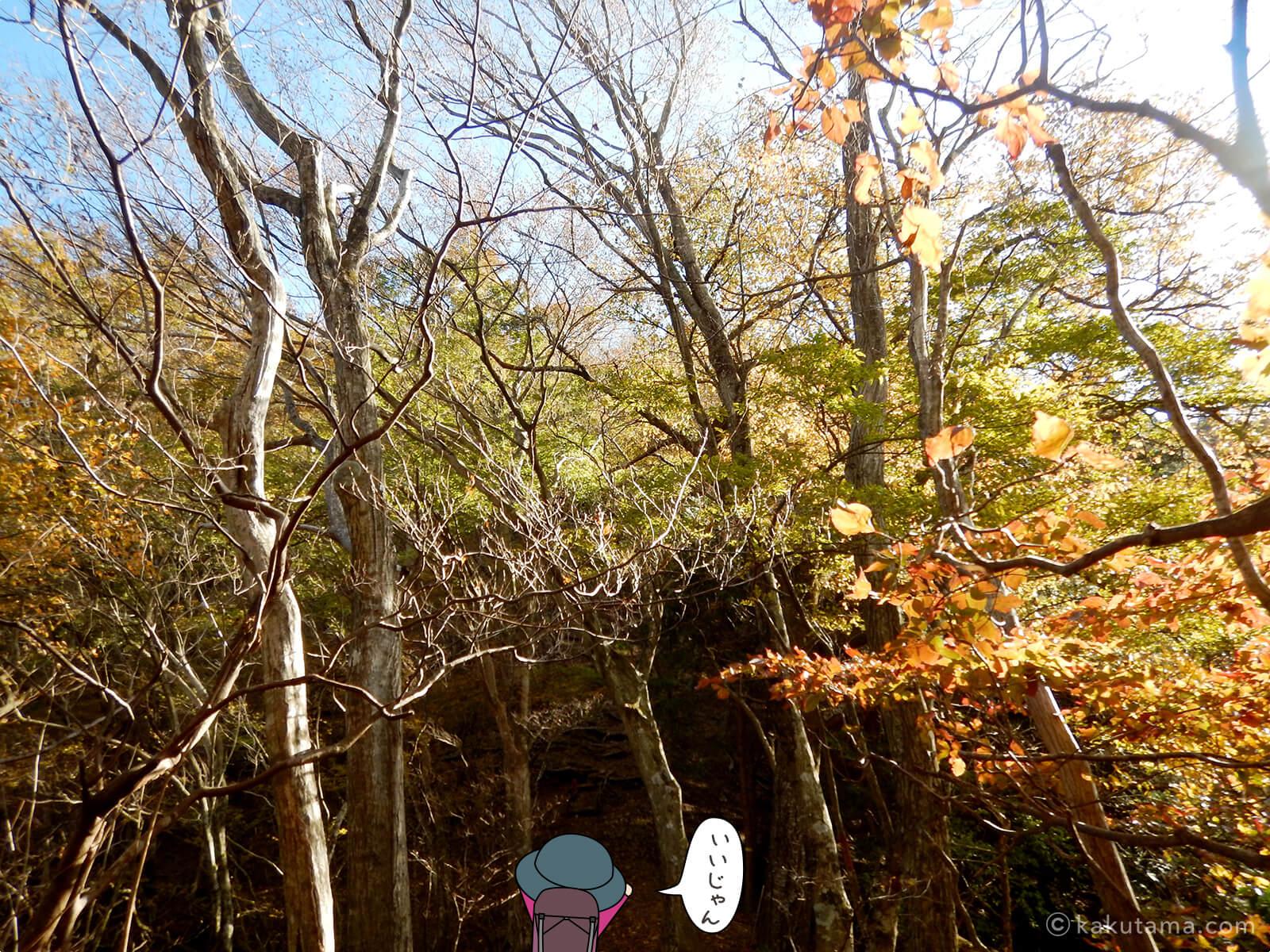 紅葉と午後の日差しがきれい