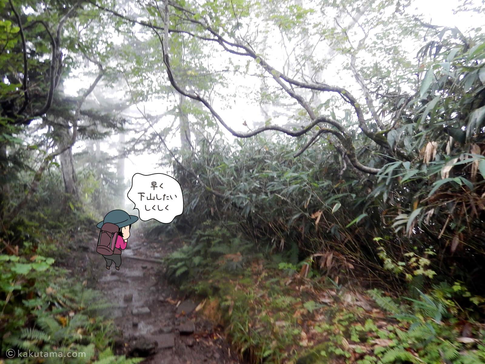栂池自然園へ向けてひたすら下山2
