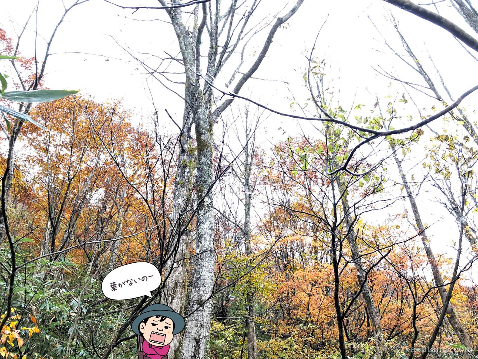 風吹岳の紅葉の写真1