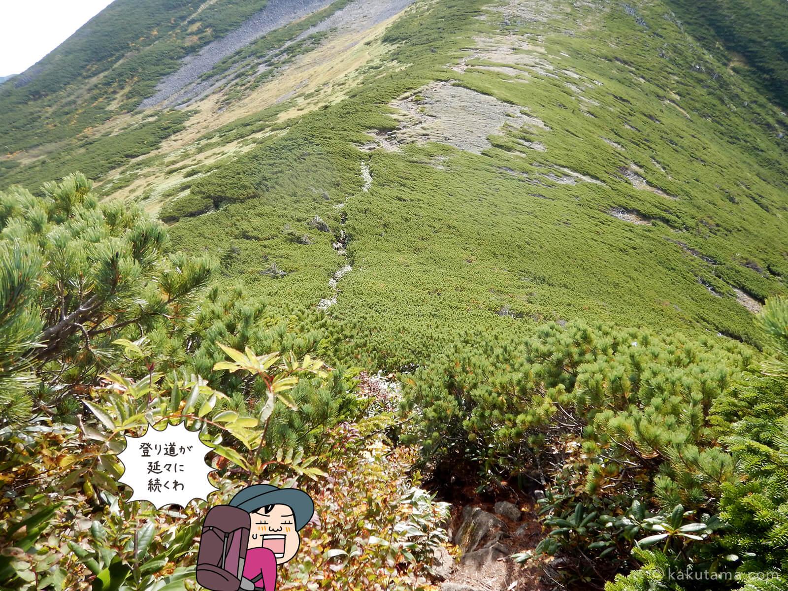 長い長い黒部五郎岳への道