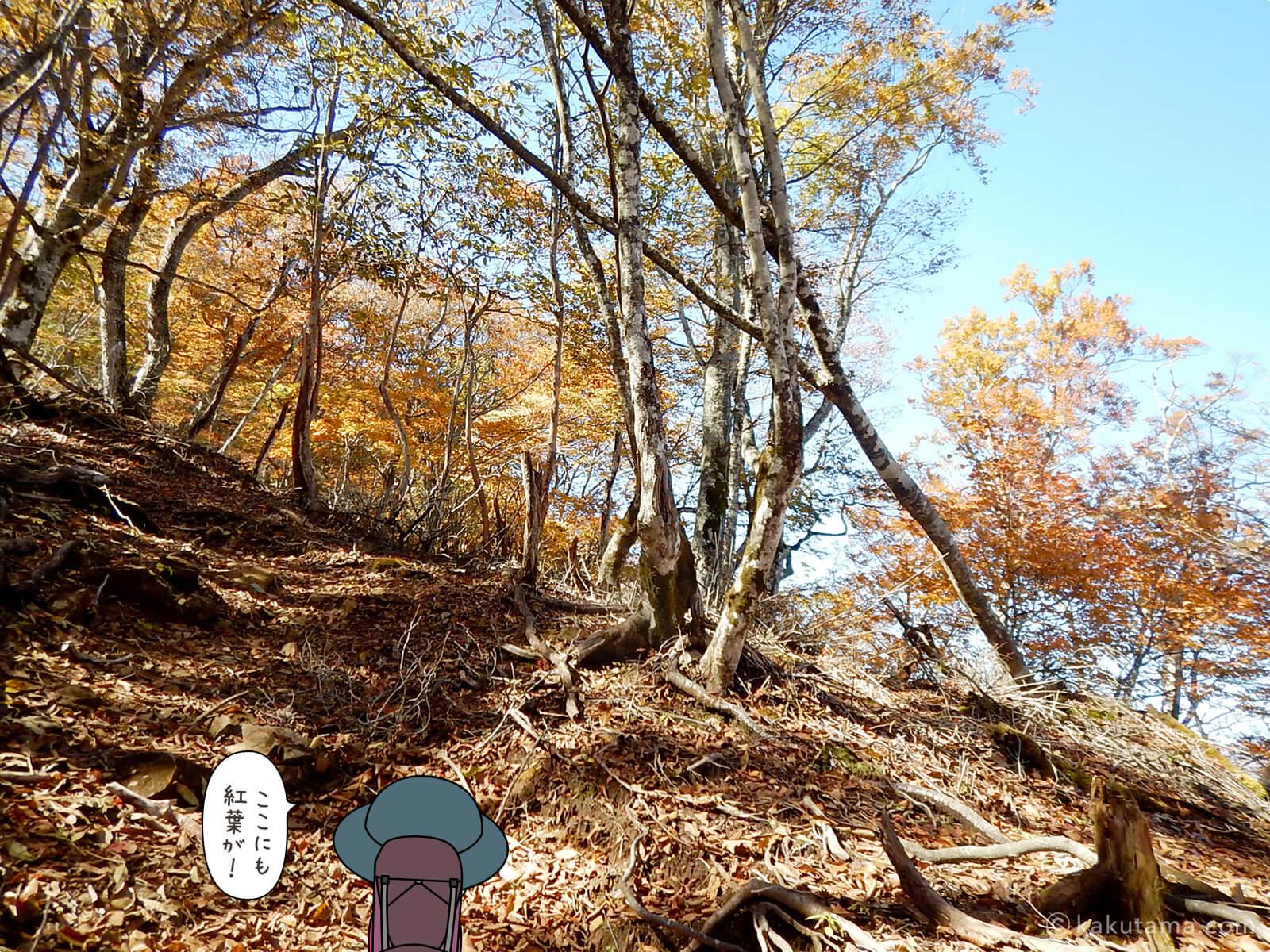 奥多摩・鷹ノ巣山の紅葉写真1