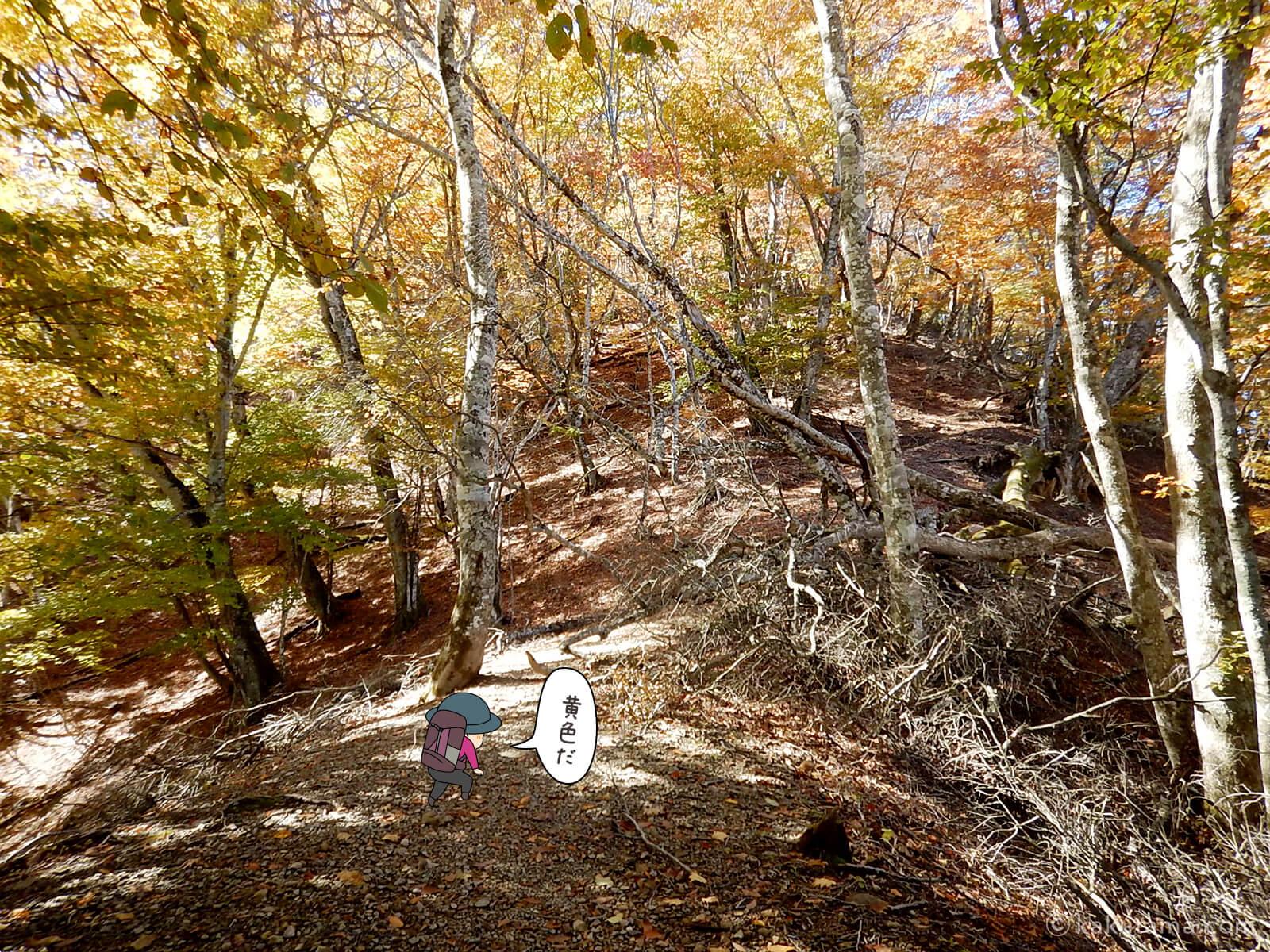 奥多摩・鷹ノ巣山の紅葉写真2