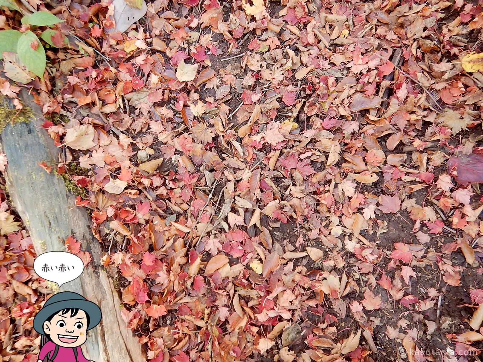 奥多摩・鷹ノ巣山の紅葉写真3