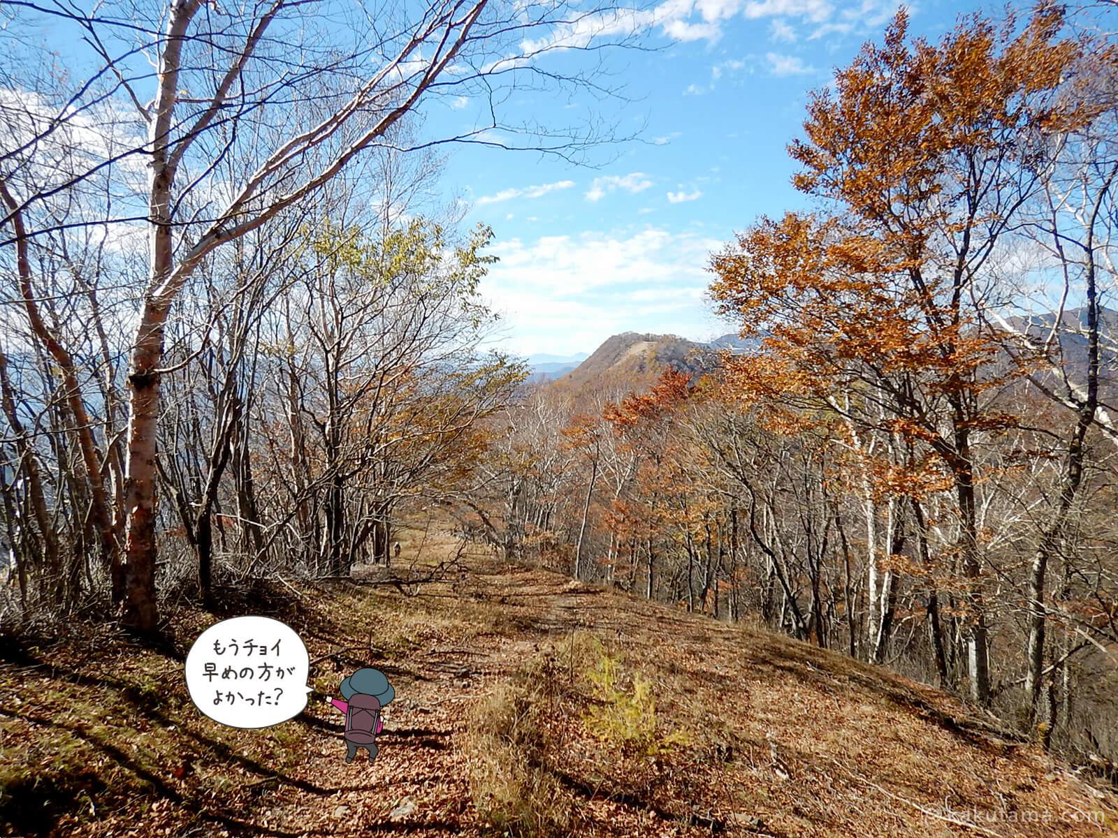 鷹ノ巣山避難小屋付近の紅葉写真1