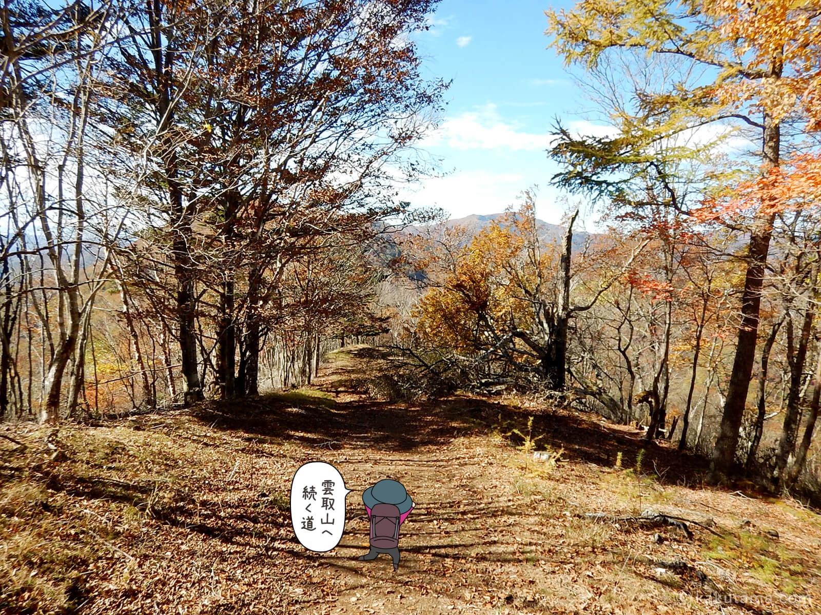 鷹ノ巣山避難小屋付近の紅葉写真2
