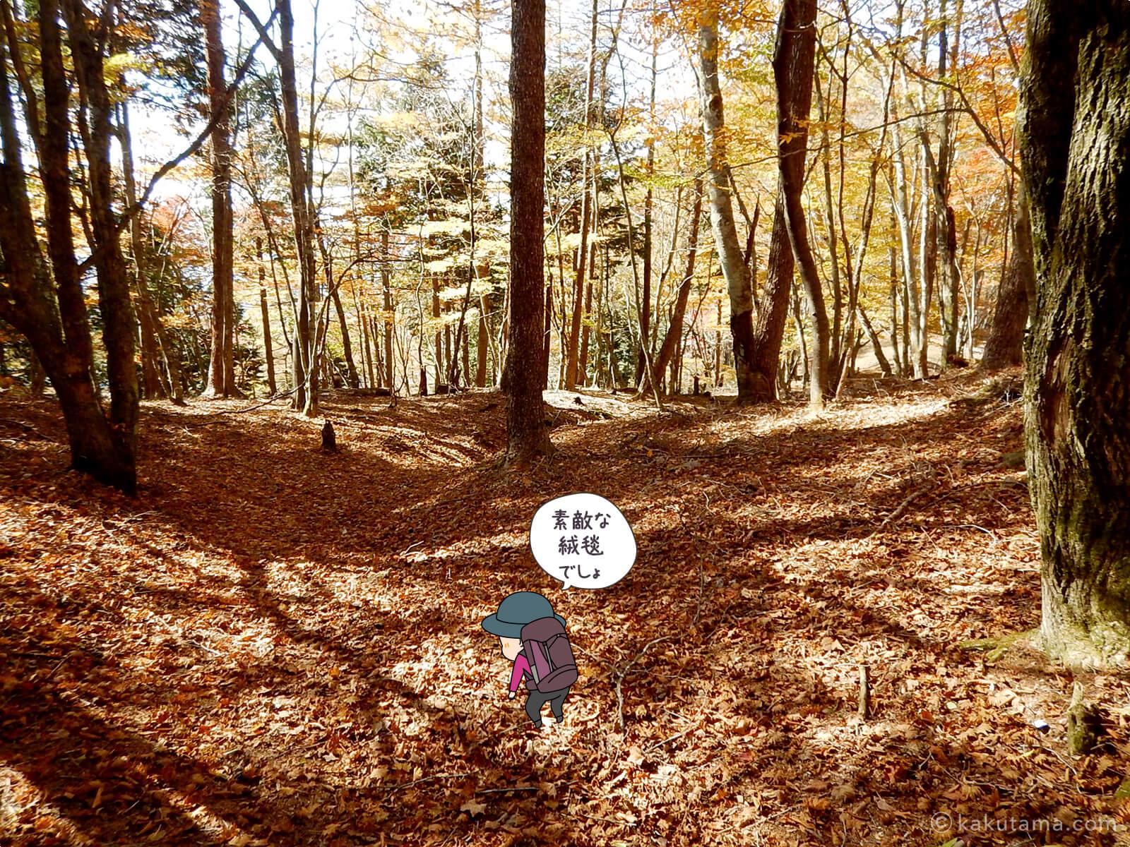 鷹ノ巣山避難小屋付近の紅葉写真3
